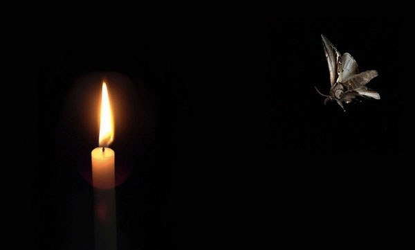 moth-to-the-flame-3