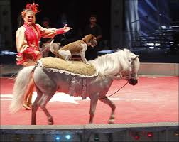 dog-and-pony-show