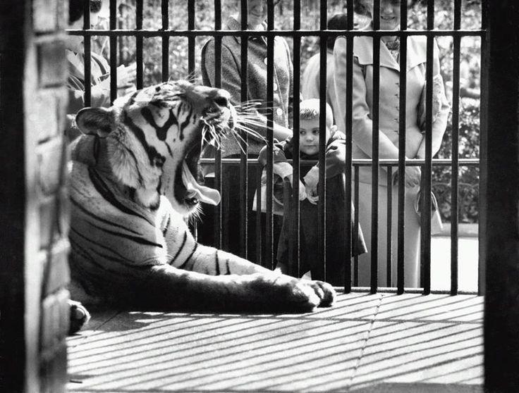 CP Zoo1